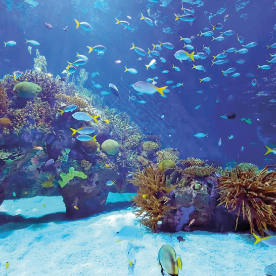 Aquarium-6.png