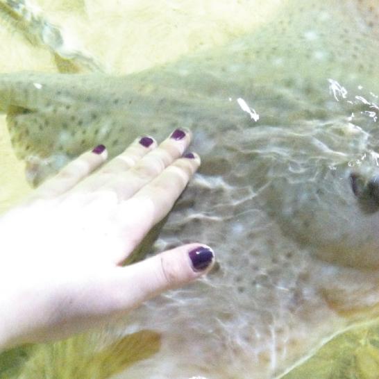 Aquarium-8.png