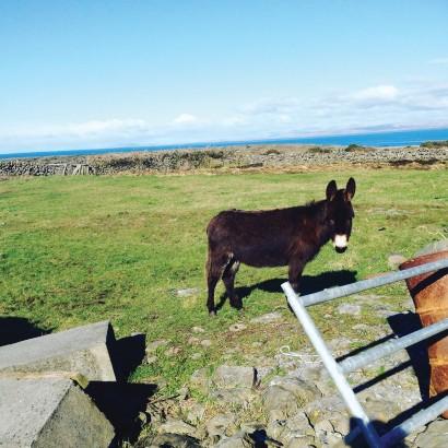 Connemara-3.jpg