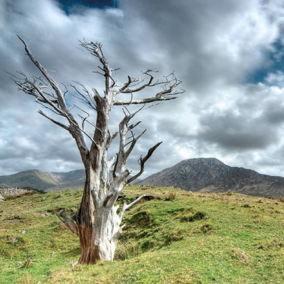 Connemara-National-Park-2.jpg