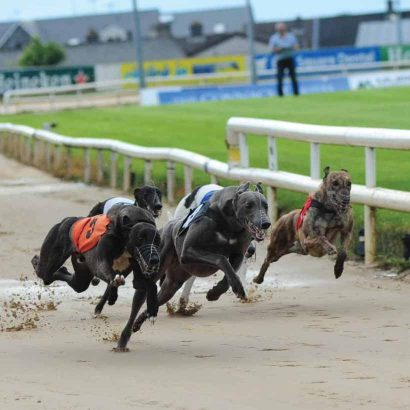 Galway-Greyhound-10.jpg