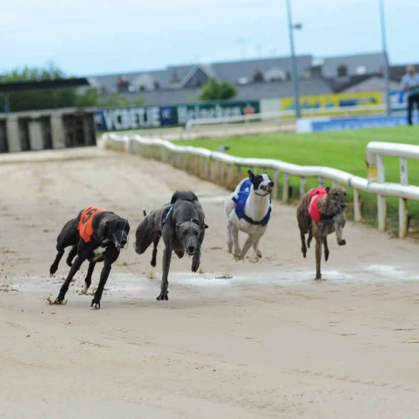 Galway-Greyhound-Main.jpg