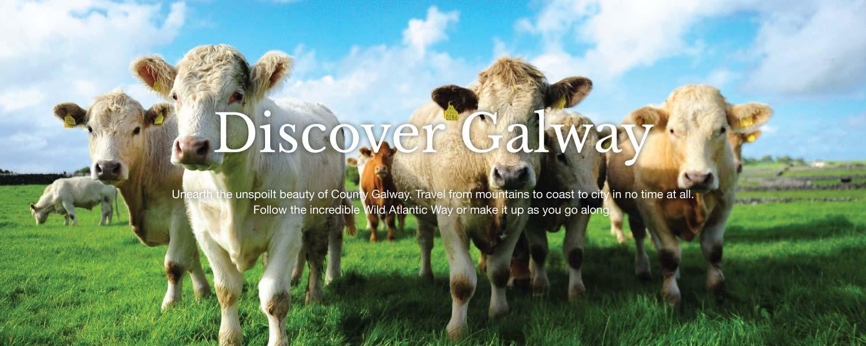 Slider-Cows