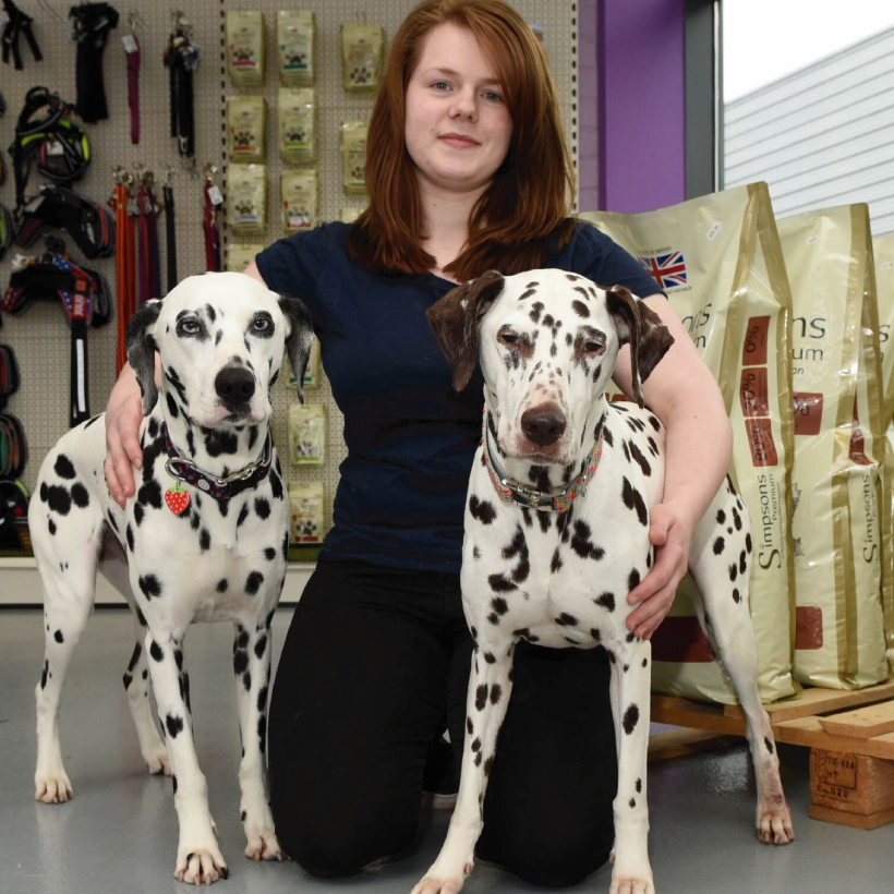 Dog Grooming Briarhill Galway