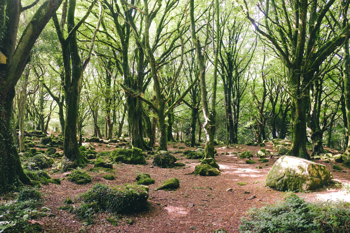 Woodland Walks Galway