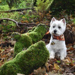 DOG FRIENDLY DESTINATIONS IN GALWAY