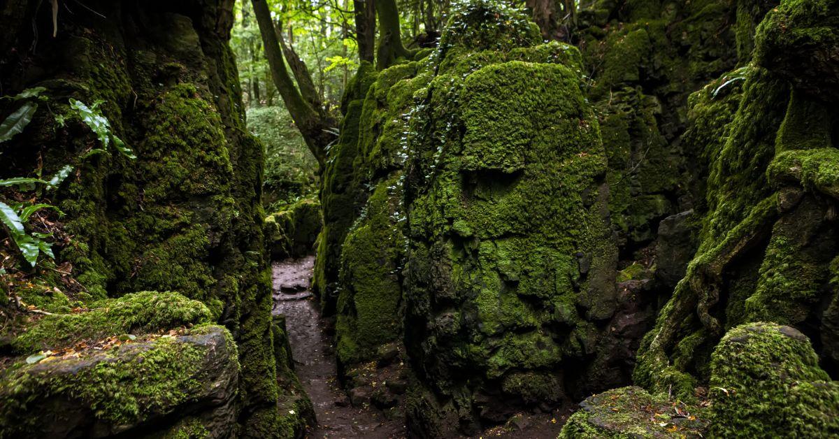 Merlin Woods Galway