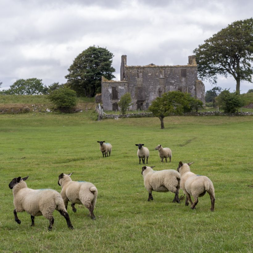 Other Spots to visit Tuam